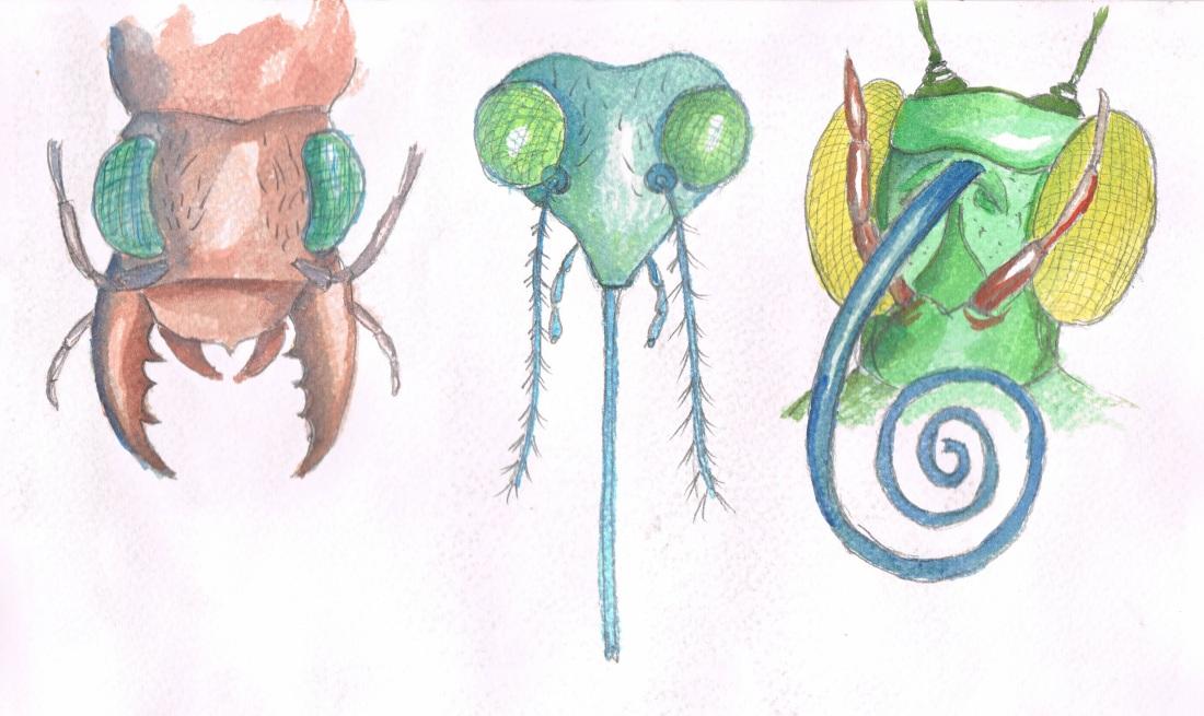 Bocas insectos 2